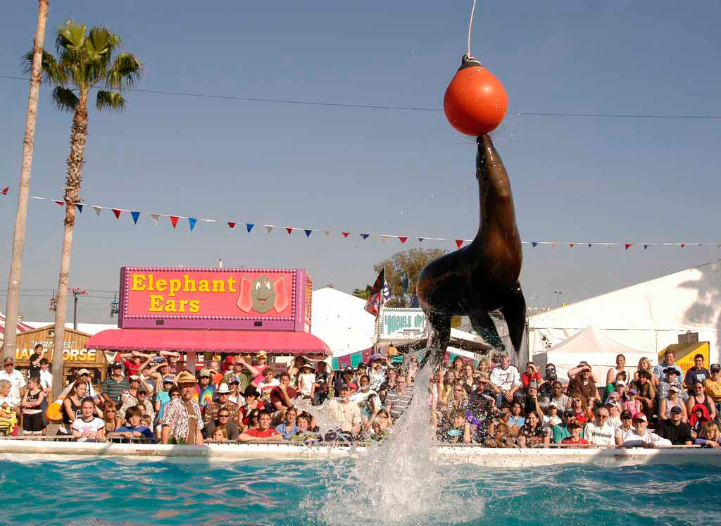 Sea Lion Splash