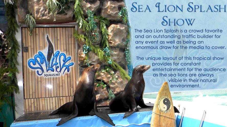 Sea Lion Splash